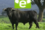 Pictture of the logo of Etoro broker